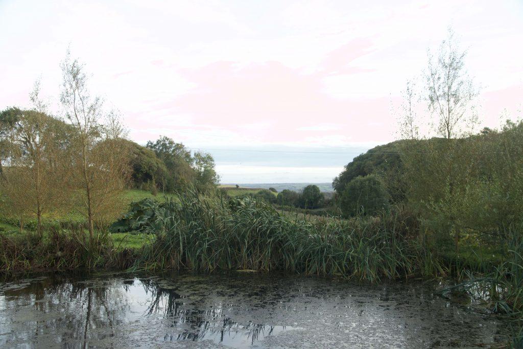 Ash Barton Pond View